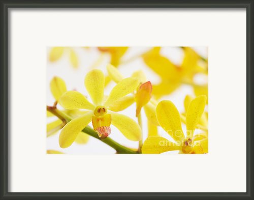 Focus On Framed Print By Atiketta Sangasaeng