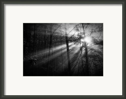 Foggy Forest Framed Print By Matt  Trimble