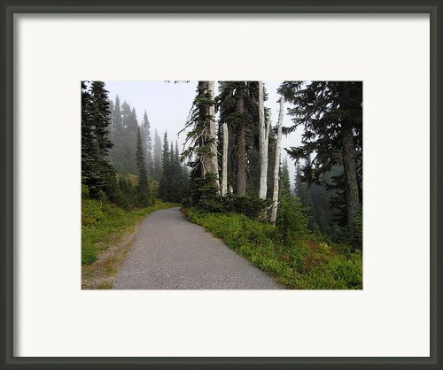 Foggy Forest Framed Print By Silvie Kendall