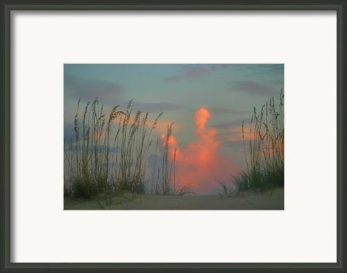 Foggy Oats Framed Print By Kristin Elmquist