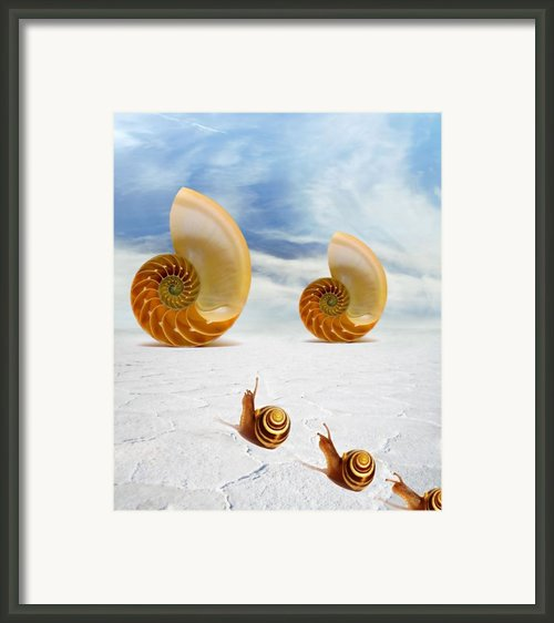 Follow Your Dreams Framed Print By Photodream Art
