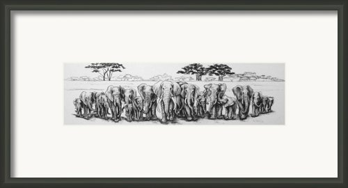 Following The Matriarch Framed Print By Ann Beeching