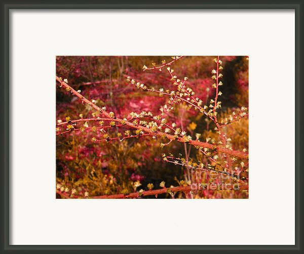 Forest - Red Branch Framed Print By Go Van Kampen