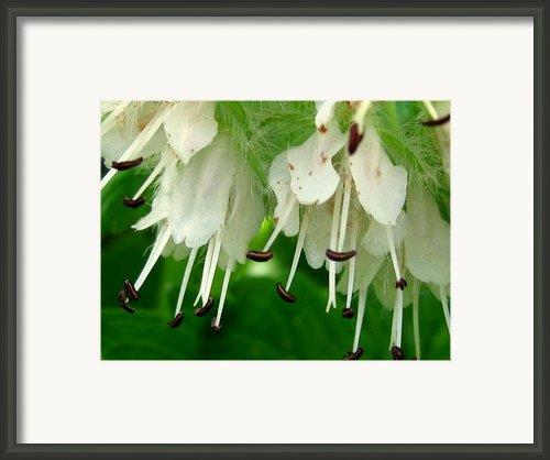 Forest Ballerinas Framed Print By Louie Rochon