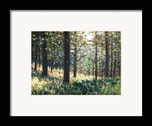 Forest- County Wicklow - Ireland Framed Print By John  Nolan