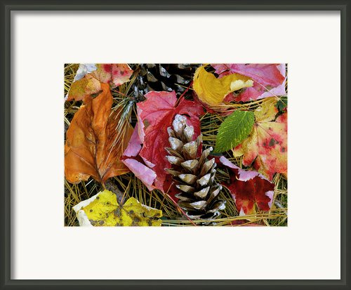 Forest Floor Portrait Framed Print By Rich Franco