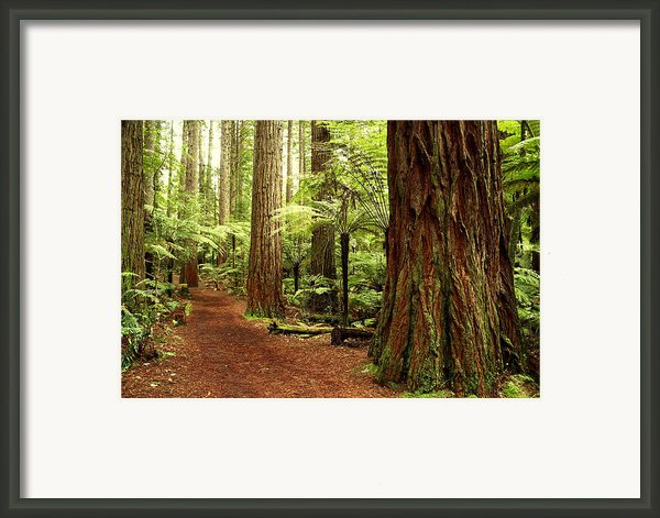 Forest Framed Print By Les Cunliffe
