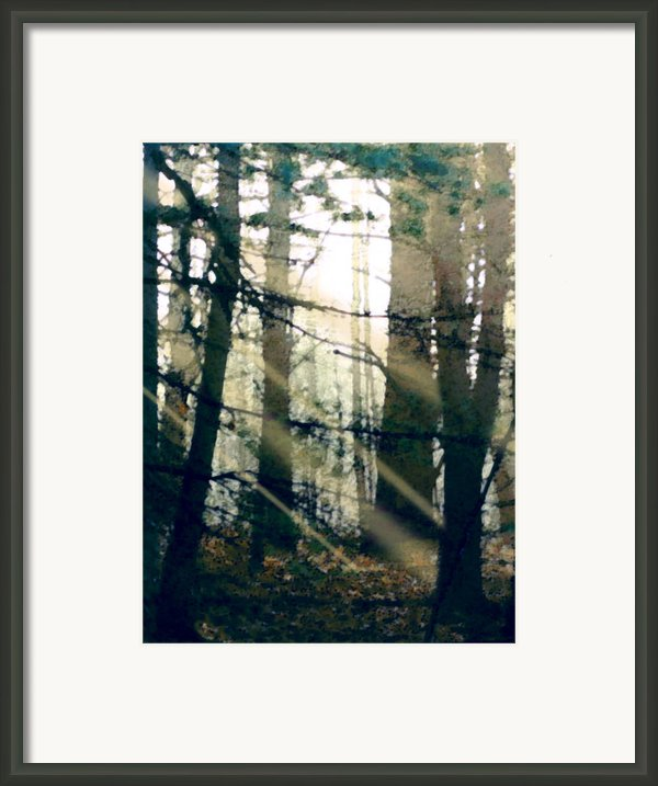 Forest Sunrise Framed Print By Paul Sachtleben