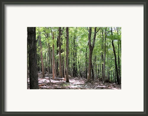 Forest Through The Trees Framed Print By