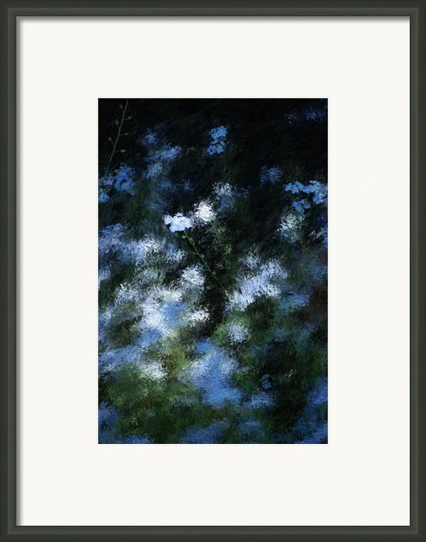 Forget Me Not Framed Print By David Lane
