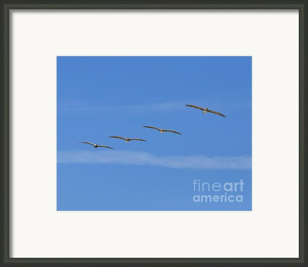 Four Flyers Framed Print By Al Powell Photography Usa