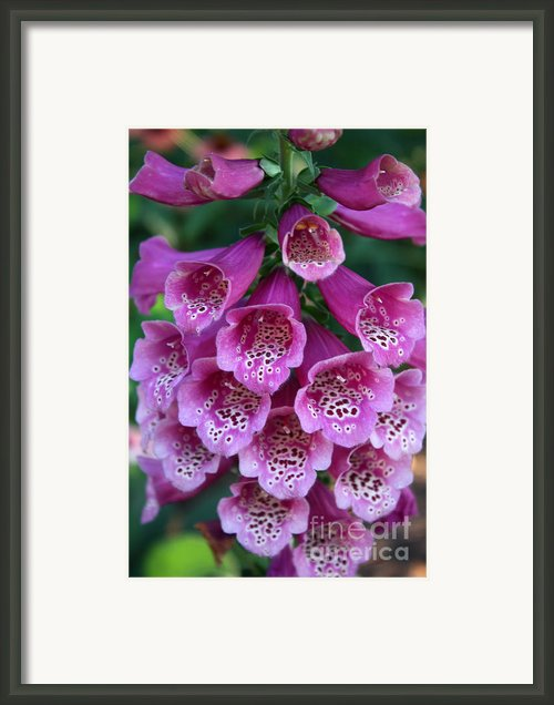 Foxglove Framed Print By David Bearden