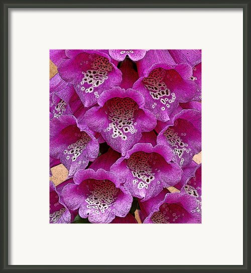 Foxglove Framed Print By Diane E Berry