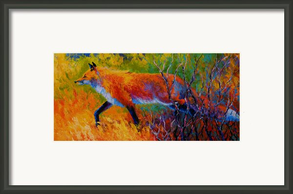 Foxy - Red Fox Framed Print By Marion Rose