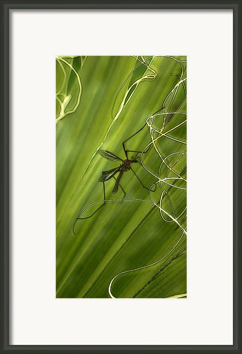 Fragile Ties Framed Print By Barbara  White