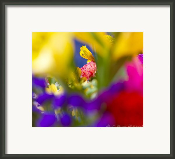 Framed Framed Print By Charles Warren