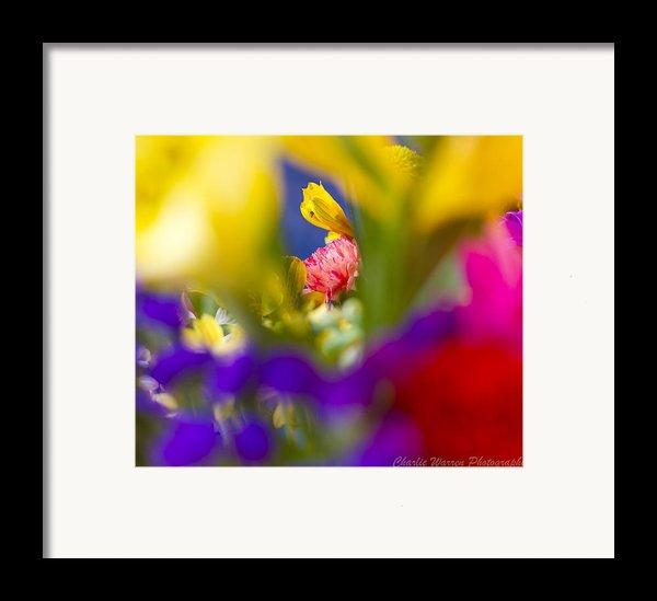 Framed Framed Print By Charles Warren