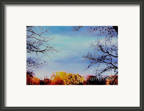 Framed Fall Trees Framed Print By Marsha Heiken