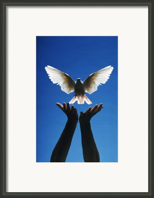 Freedom Framed Print By Gerard Fritz