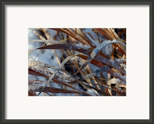 Freeze Dried Framed Print By Steven Milner