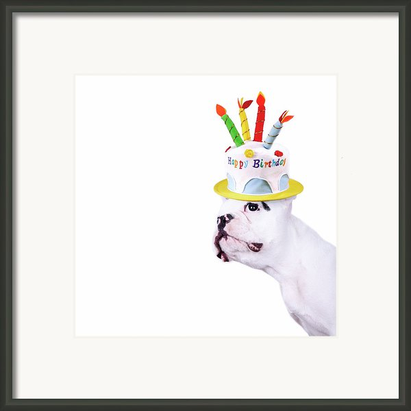 French Bulldog With Birthday Cake Framed Print By Maika 777