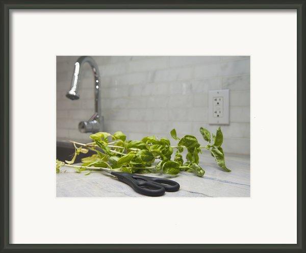 Fresh Basil Herb Leaves From The Garden Framed Print By Marlene Ford