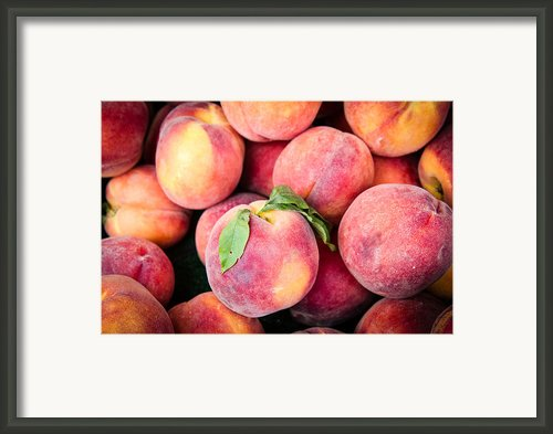 Fresh Peaches Framed Print By Dina Calvarese
