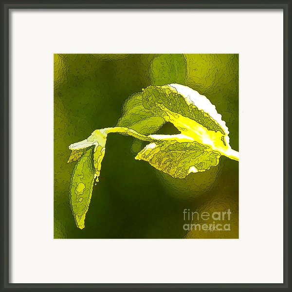 Fresh Peas Framed Print By Artist And Photographer Laura Wrede