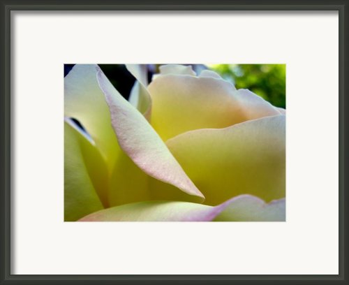 Fresh Summer Sheets Framed Print By Louie Rochon
