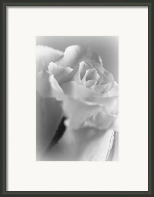 Friendship Rose In Black And White Framed Print By Mark J Seefeldt