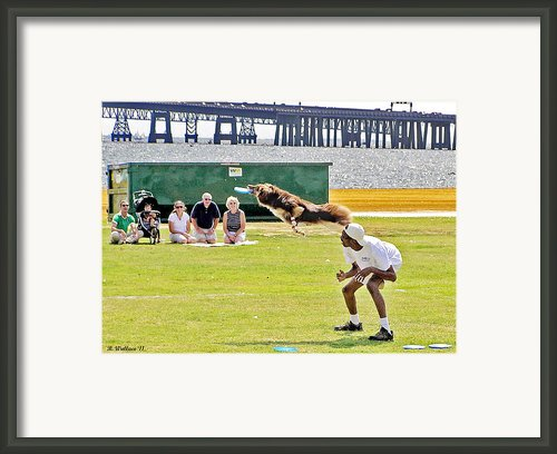 Frisbee Dog Framed Print By Brian Wallace
