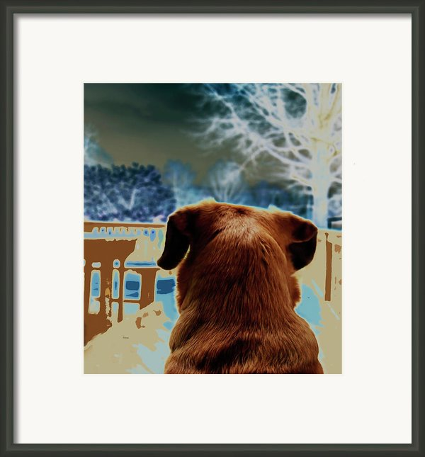 From Her Perspective   Framed Print By Steven  Digman