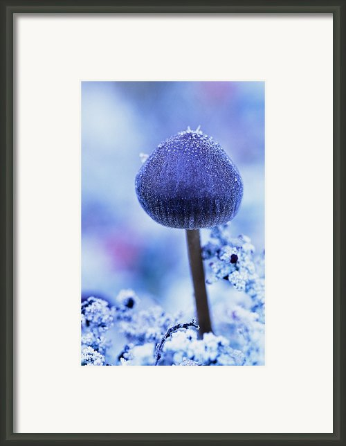 Frost Covered Mushroom, North Canol Framed Print By Robert Postma
