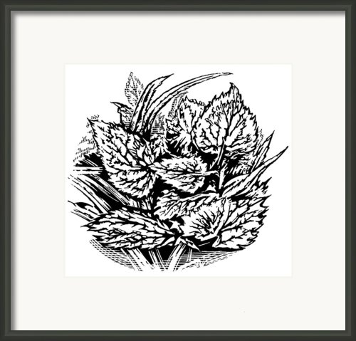 Frost On Leaves, Woodcut Framed Print By Gary Hincks