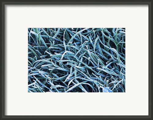 Frosty Grass Framed Print By Elena Elisseeva