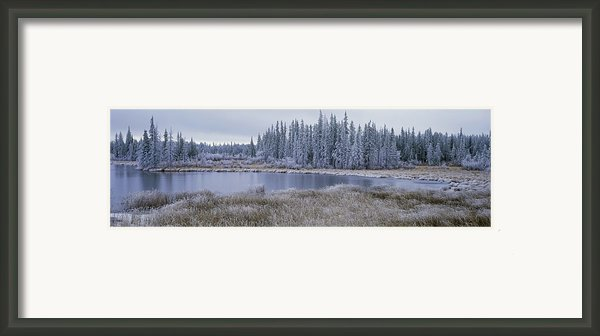Frozen Swampland, Near 100 Mile House Framed Print By David Nunuk