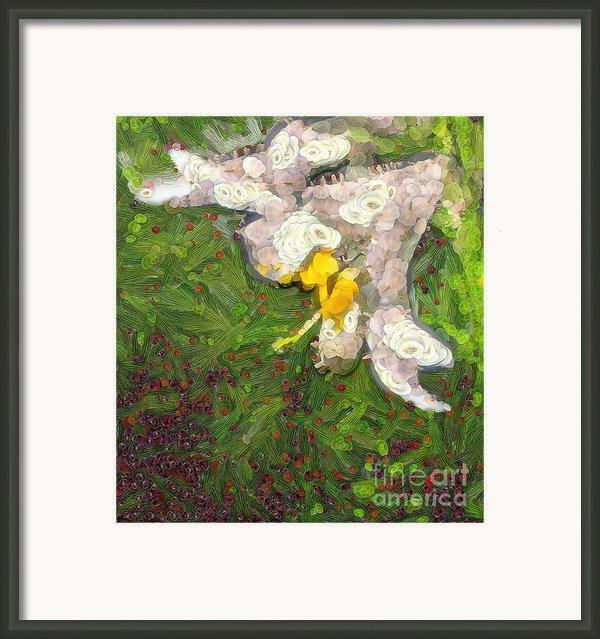 Fruit Lily Framed Print By Odon Czintos