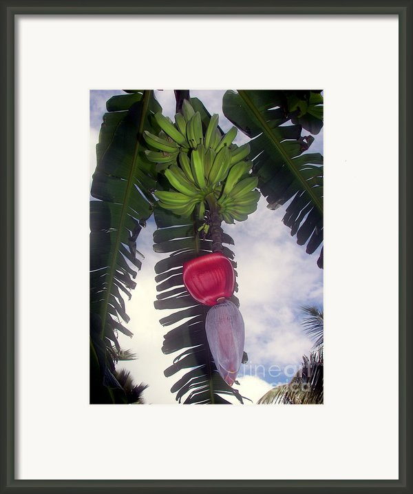 Fruitful Beauty Framed Print By Karen Wiles
