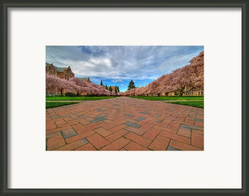Full Bloom Framed Print By Dan Mihai