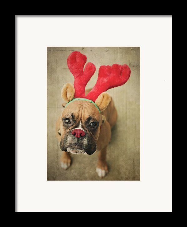 Funny Boxer Puppy Framed Print By Jody Trappe Photography