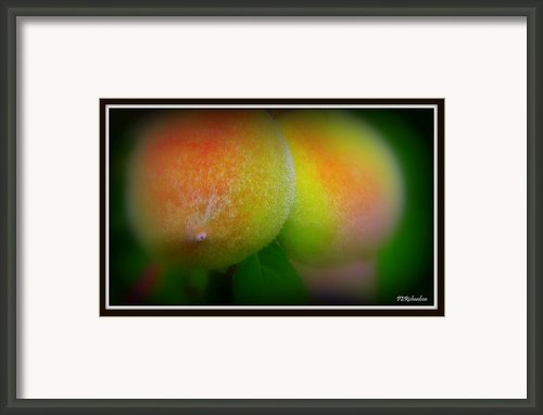 Fuzz Framed Print By Priscilla Richardson