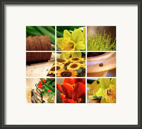 Garden Collage Framed Print By Sandra Cunningham