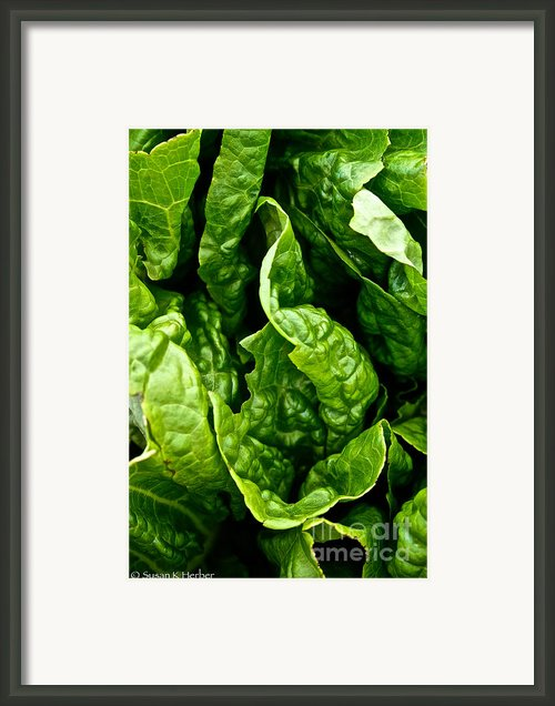 Garden Fresh Framed Print By Susan Herber