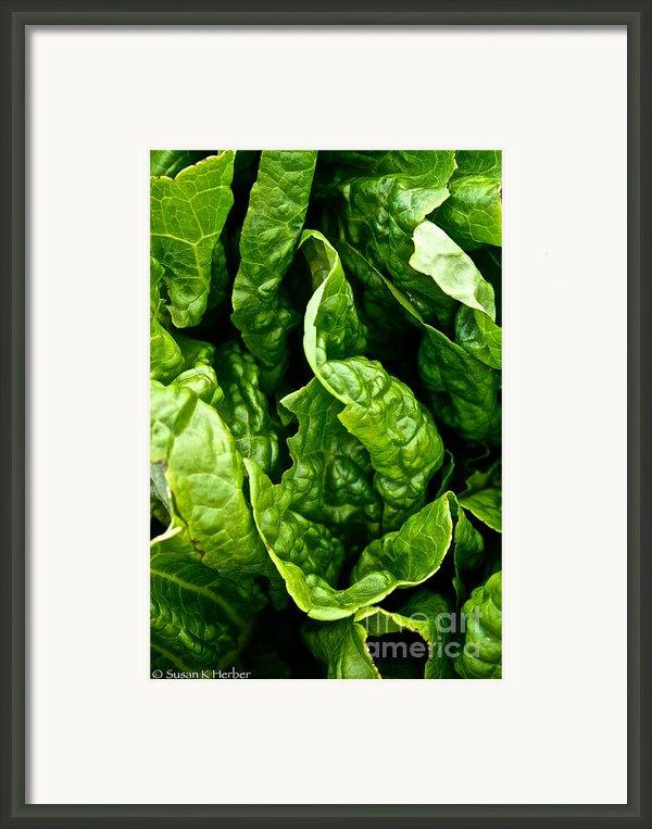Garden Fresh Framed Print By Susan Herber