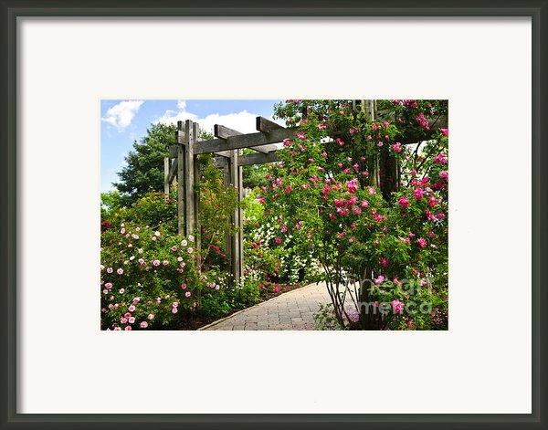 Garden With Roses Framed Print By Elena Elisseeva