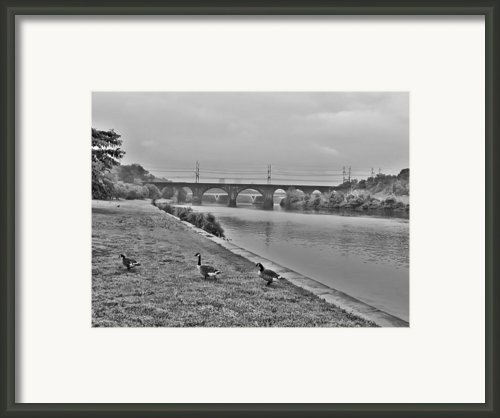 Geese Along The Schuylkill River Framed Print By Bill Cannon