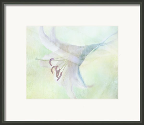Gentle Lily Framed Print By Sharon Lapkin