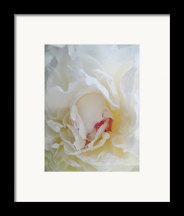 Gently Unfolding Framed Print By Shirley Sirois