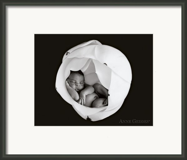 Gerald In Magnolia Framed Print By Anne Geddes
