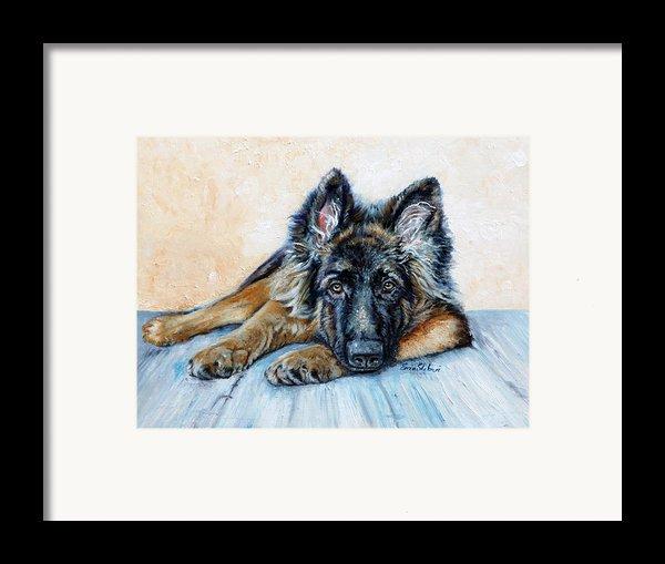 German Shepherd Framed Print By Enzie Shahmiri